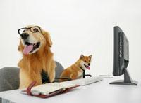 椅子に座る二匹の犬 11004020844| 写真素材・ストックフォト・画像・イラスト素材|アマナイメージズ