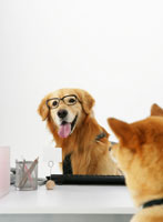 向かい合って座る犬 11004020882| 写真素材・ストックフォト・画像・イラスト素材|アマナイメージズ