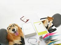 向かい合って座る犬 11004020885| 写真素材・ストックフォト・画像・イラスト素材|アマナイメージズ