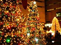 輝くクリスマスツリー