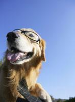 メガネを掛けネクタイをした犬