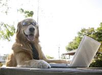 メガネを掛けパソコンを見る犬