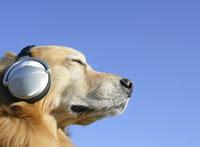 ヘッドフォンをした犬