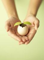 芽が出た卵を持つ手