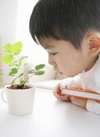 植木鉢を見つめる男の子
