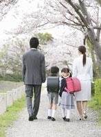 桜並木を歩く家族の後ろ姿