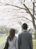 桜並木に立つビジネスマンとOLの後ろ姿