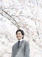 桜の木と笑顔のビジネスマン
