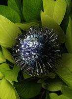 観葉植物に置かれた地球のオブジェ