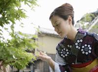 緑の葉っぱを触る浴衣姿の女性