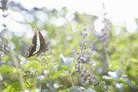 草花の上に止まる蝶々