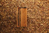 落ち葉の絨毯の上に置かれた木のベンチ