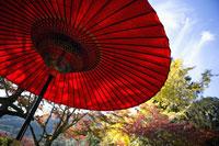 紅葉と番傘