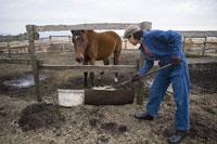 牧場で働く男性