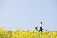菜の花畑と自転車と女性
