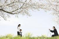 桜の木の下で写真撮影をする日本人家族
