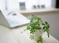 観葉植物とノートパソコン 11004080310  写真素材・ストックフォト・画像・イラスト素材 アマナイメージズ