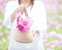 コスモスの花を入れたカバンを持つ女性 11004081950| 写真素材・ストックフォト・画像・イラスト素材|アマナイメージズ