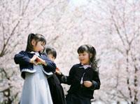 桜の花と新入生の女の子達
