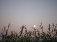 すすきと月 11004083540| 写真素材・ストックフォト・画像・イラスト素材|アマナイメージズ
