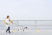 ダルメシアン犬と散歩する女性