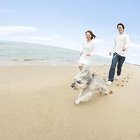 砂浜で犬と散歩をする日本人カップル