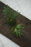 植物 11004100520| 写真素材・ストックフォト・画像・イラスト素材|アマナイメージズ
