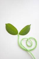 毛糸と葉っぱ