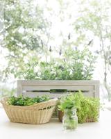 鉢植えのラベンダー 11004103170| 写真素材・ストックフォト・画像・イラスト素材|アマナイメージズ
