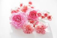 バラとカーネーション 11004103172| 写真素材・ストックフォト・画像・イラスト素材|アマナイメージズ