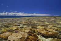 サンゴ礁の海