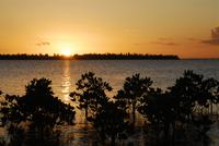 マングローブと夕日