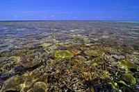 サンゴ礁の海 新城海岸