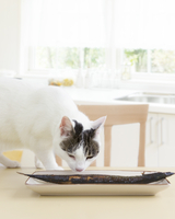 猫とテーブルに置かれた秋刀魚