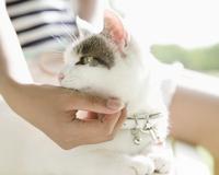 猫を撫でる女性の手元