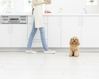 キッチンを歩く女性とトイプードル