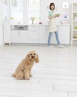 トイプードルとキッチンに立つ女性