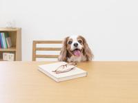 テーブルから顔を出す犬