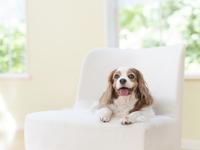 椅子に寝る犬