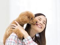 女性の顔を舐めるトイプードル