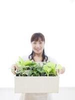 木箱の中の観葉植物 11004117417  写真素材・ストックフォト・画像・イラスト素材 アマナイメージズ