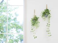 窓辺の観葉植物 11004117607  写真素材・ストックフォト・画像・イラスト素材 アマナイメージズ