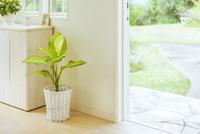 玄関と観葉植物のイメージ