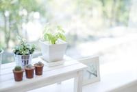 観葉植物 11004120750  写真素材・ストックフォト・画像・イラスト素材 アマナイメージズ