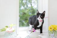 花と猫 11004120949  写真素材・ストックフォト・画像・イラスト素材 アマナイメージズ