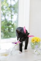 花を嗅ぐ猫