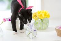 花を嗅ぐネコ