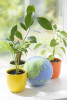 植物と地球儀