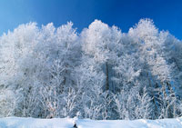 森林 11007014326| 写真素材・ストックフォト・画像・イラスト素材|アマナイメージズ