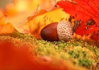 ドングリと落ち葉